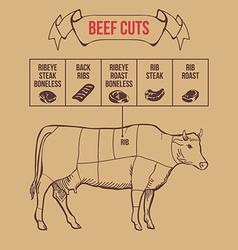 Vintage butcher cuts beef scheme vector