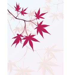 Japanese Maple vector image