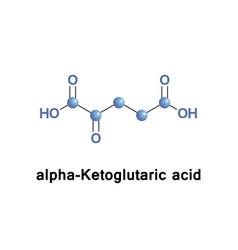 Alpha-ketoglutaric acid vector