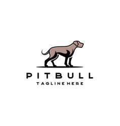 american bulldog pitbull logo design vector image