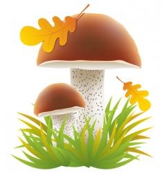 boletus mushrooms vector image