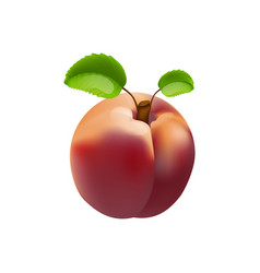 Nectarine isolated vector