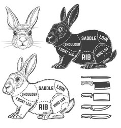 rabbit butcher diagram design element for poster vector image