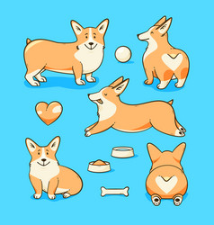 welsh corgi dog vector image