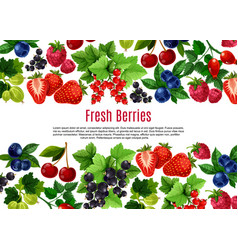 berry and fruit cartoon poster template design vector image vector image