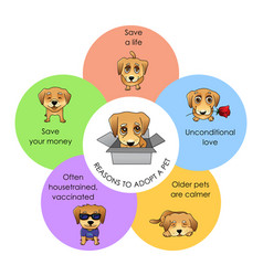 reasons to adopt a pet infographics vector image
