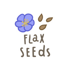 flax seeds superfood vector image vector image
