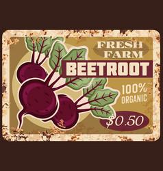 Beetroot metal plate rusty beet root vegetables vector