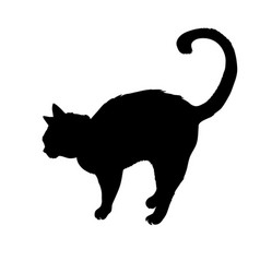 Black cat silhouette isolated on white background vector