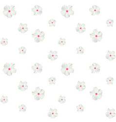 colorful beautiful naturalistic white flower vector image