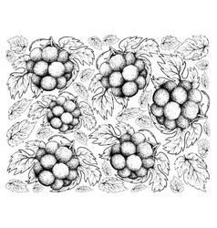 Hand drawing background of fresh pione grapes vector