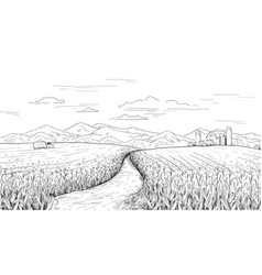 hand drawn field landscape corn farm sketch vector image