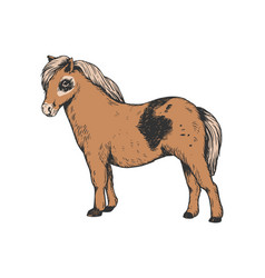 Pony small horse color engraving vector