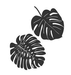 sketch design elements plant tropical leaves vector image