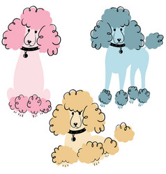 poodle dogs vector image vector image