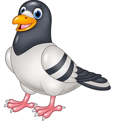 Carton funny pigeon isolated on white background vector image vector image