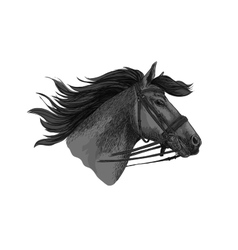 Horse trotter in bridle racing sketch vector image