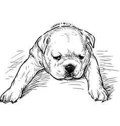 Puppy english bulldog tired vector