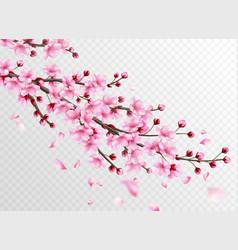 realistic sakura beautiful sakura branches with vector image