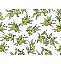 Yellow olives from branches on a white background vector image