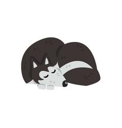 siberian husky dog character purebred dog vector image