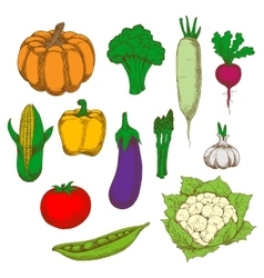 Healthy and dietary vegetables sketch symbols vector image