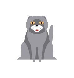 Persian Cat Breed Primitive Cartoon vector image