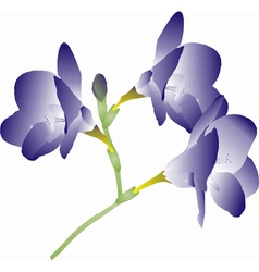 Purple freesia vector