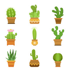 decorative cactus in pots set desert vector image vector image