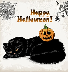 Halloween card template with a cat pumpkin spider vector image vector image