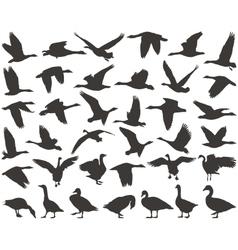Bird wild geese vector