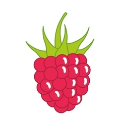 Blackberry icon Organic and Healthy food design vector