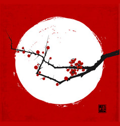 Branch japanese sakura cherry in blossom and vector