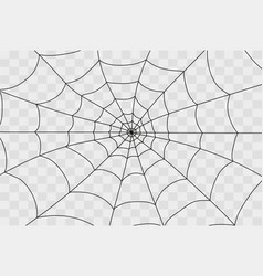 cobweb isolated on white vector image