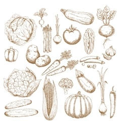 Organically healthy vegetables retro sketches vector image vector image