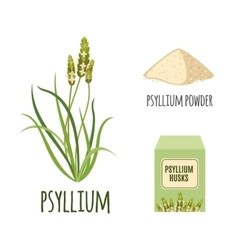 Superfood psyllium set in flat style vector image