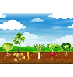 Fresh vegetables in the ground vector image vector image