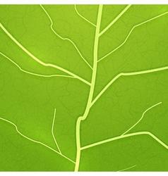 fresh green leaf texture vector image