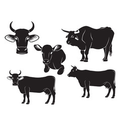 Cow bull and calf vector