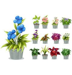 Flowers in the clay pot vector