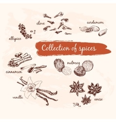 Collection of spices vector image