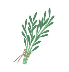 Green rosemary sprig flat vector