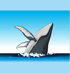 humpback whale jump out of water vector image
