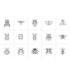 Insects sketch icon set vector