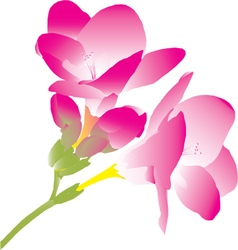 Pink freesia vector