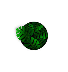 realistic tropical green monstera leaves plant vector image