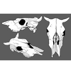 Set of skulls cow vector