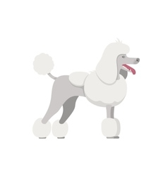 color of the dog white Grand Poodle breed vector image vector image