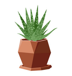 with succulent in geometric vector image vector image