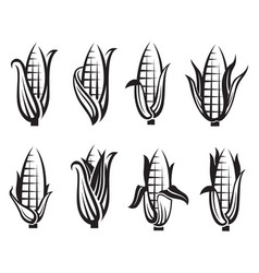 corn images set vector image